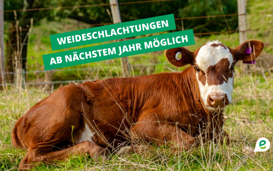 """Landwirtschaft: """"Weideschlachtungen ab nächstem Jahr möglich"""""""